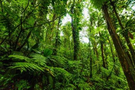 Une «Déclaration des droits de l'arbre» bientôt intégrée dans la loi?