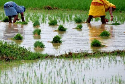 En Inde, des ablations de l'utérus forcées pour améliorer la productivité desfemmes