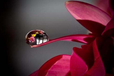 La perle de grandprix