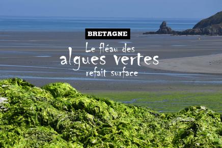 Bretagne: le fléau des algues vertes refaitsurface